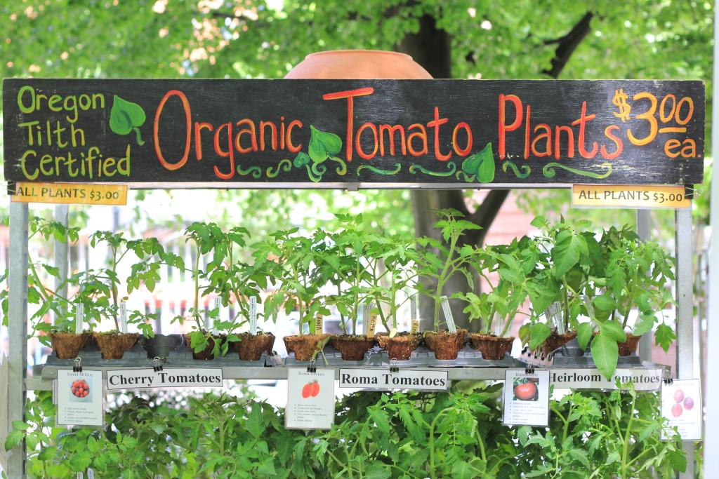 tomatostarts